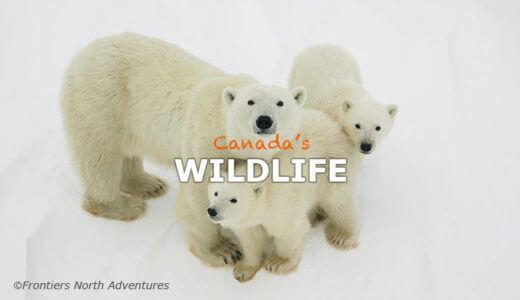 カナダの野生動物