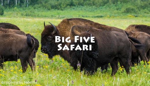 カナダの野生動物を探せ! カナダ・ビッグ・ファイブ・サファリ