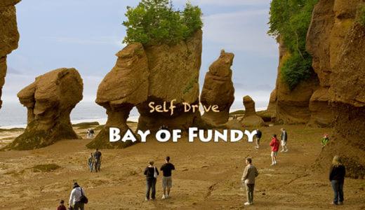 世界一の干満差を体験 ファンディ湾ドライブの旅