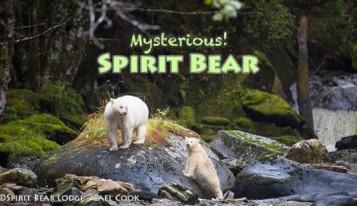 スピリットベア 精霊のクマに出会う旅
