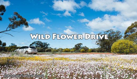 エバーラスティングの花畑をめぐる ~ セルフドライブの旅