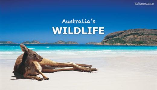 オーストラリアの野生動物