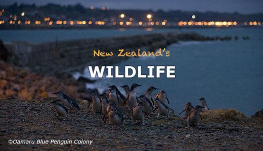 ニュージーランドの野生動物